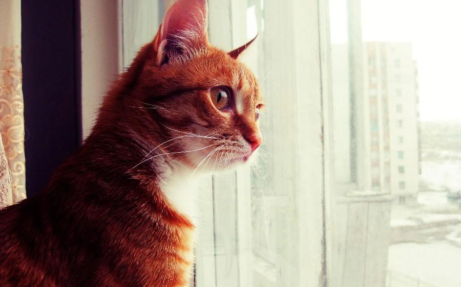 Котейка на окне