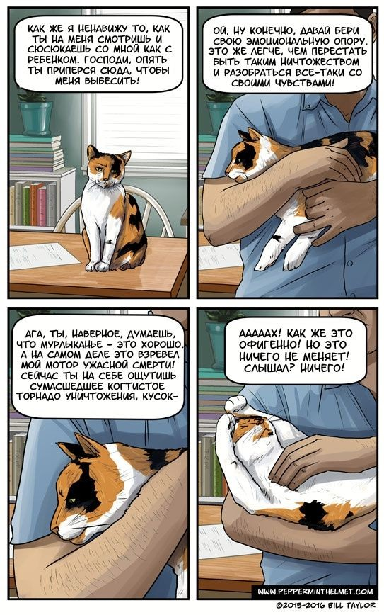Мысли твоей кошки