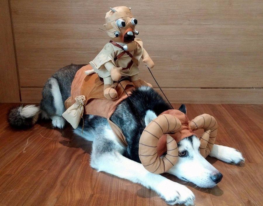 Наряд для пса