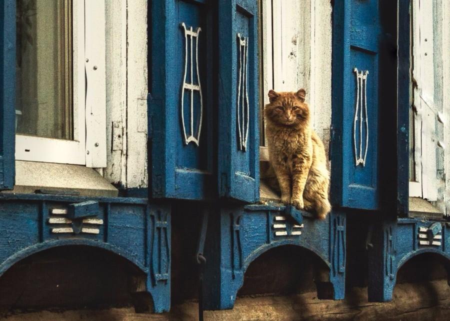 Суровый уличный котейка