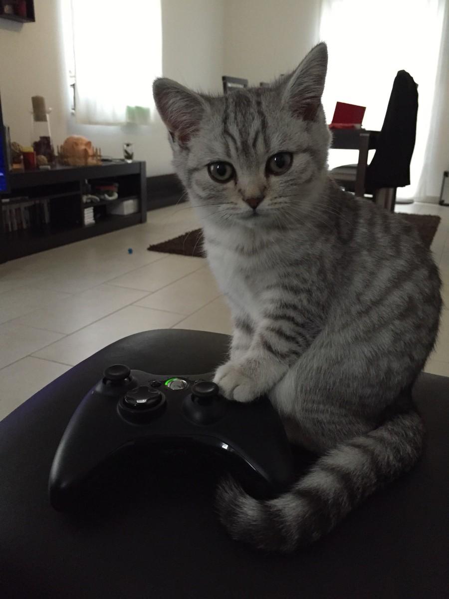 Котенок-геймер
