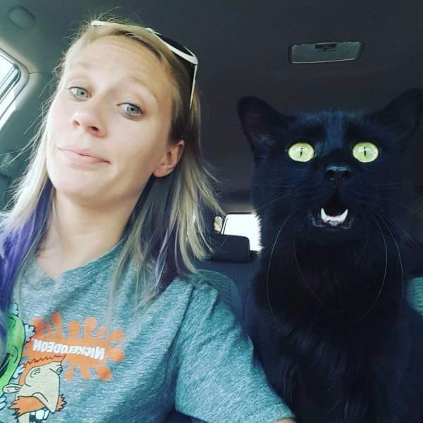 Котейка в авто