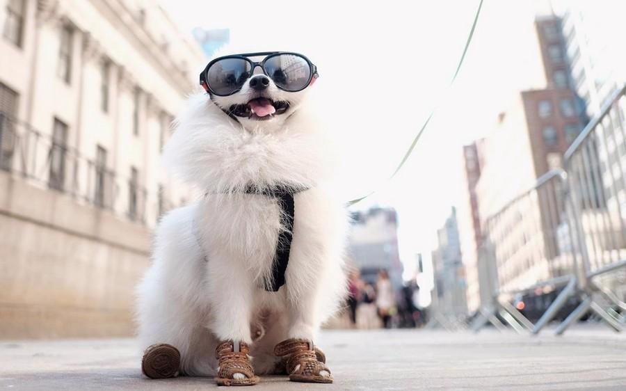 Очень крутой пес