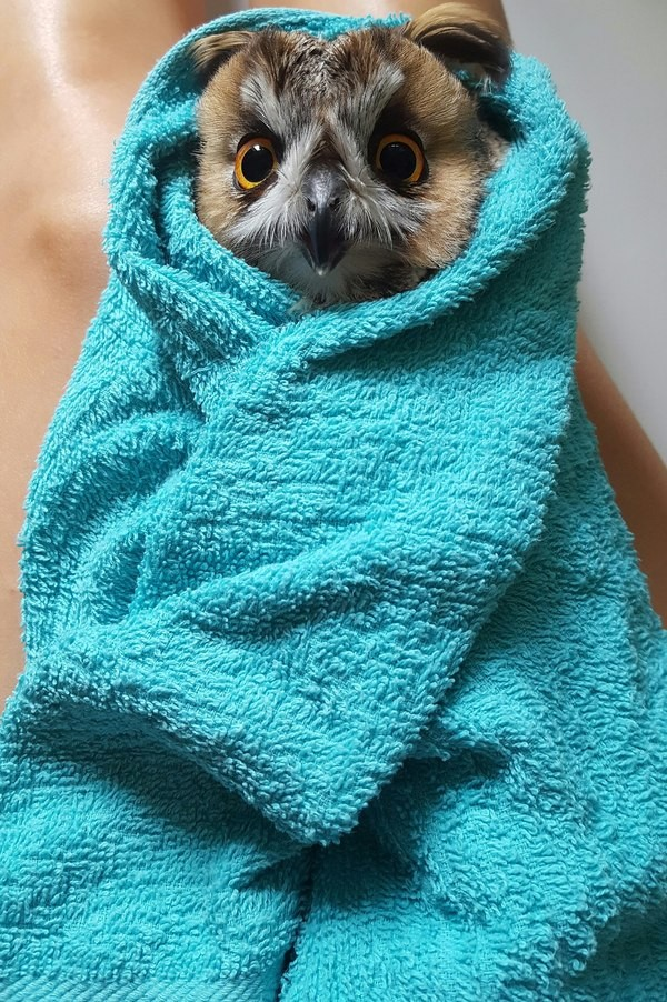 Совенок в полотенце