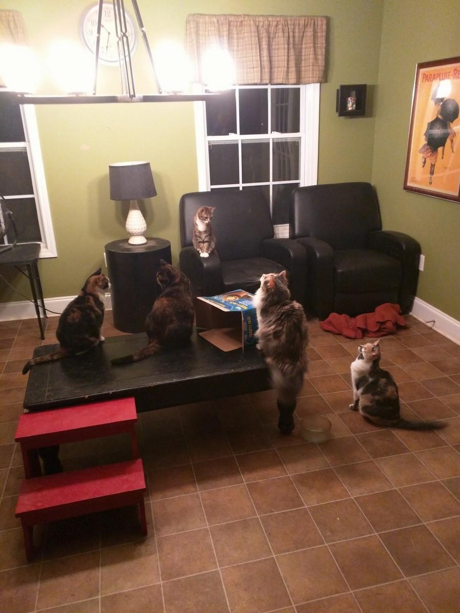 Много котов