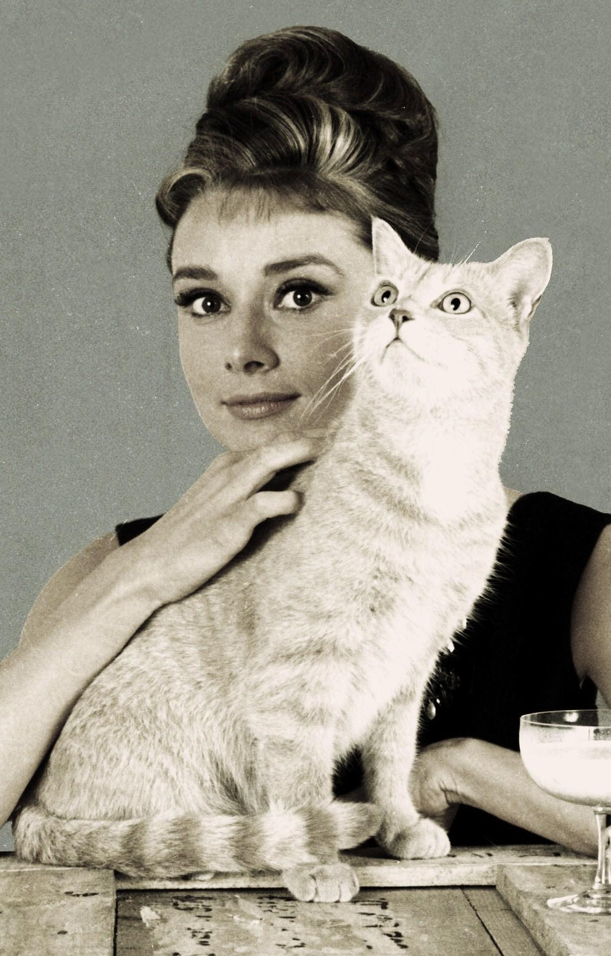 Audrey Hepburn cat%%y6.jpg
