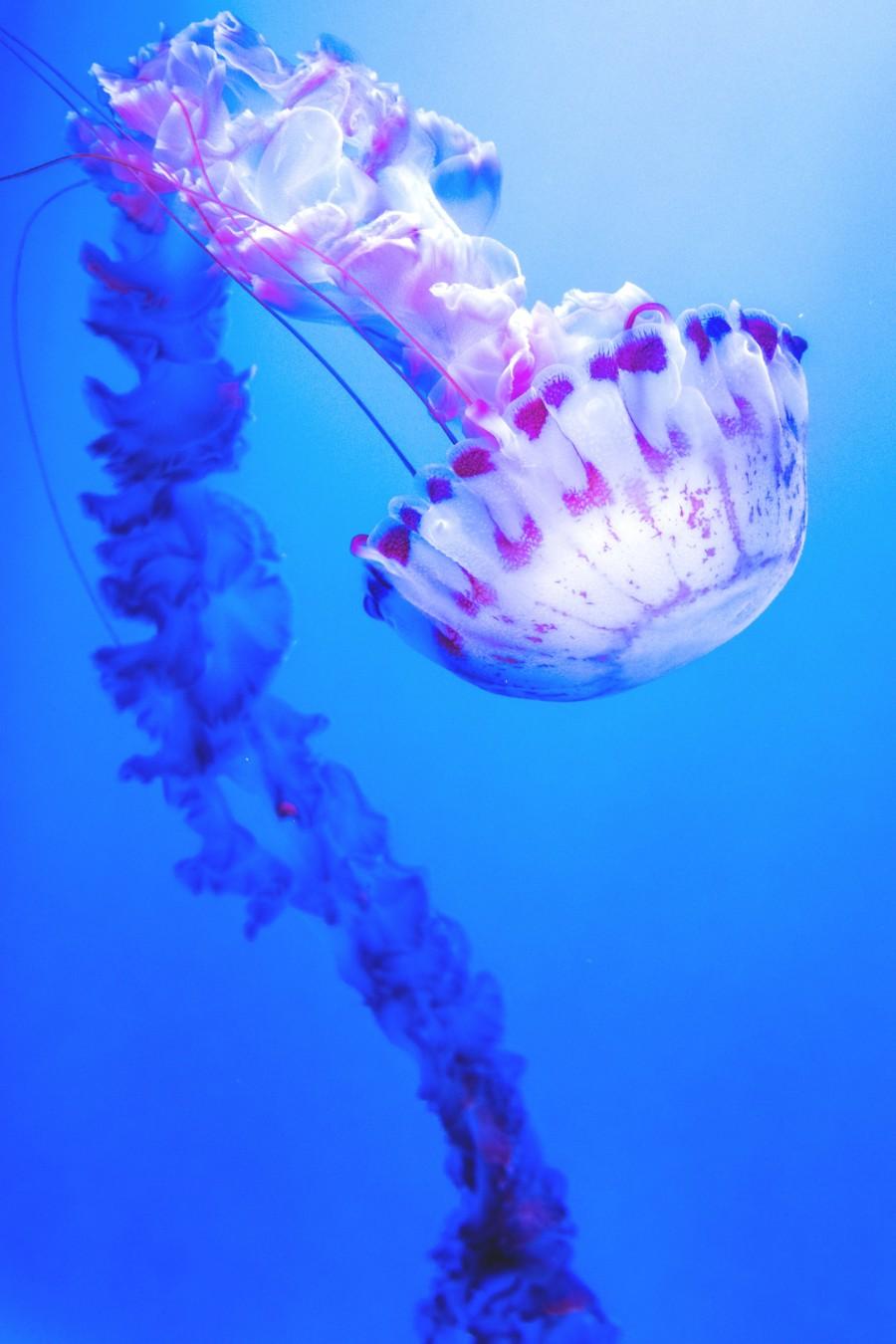 Подводная красавица