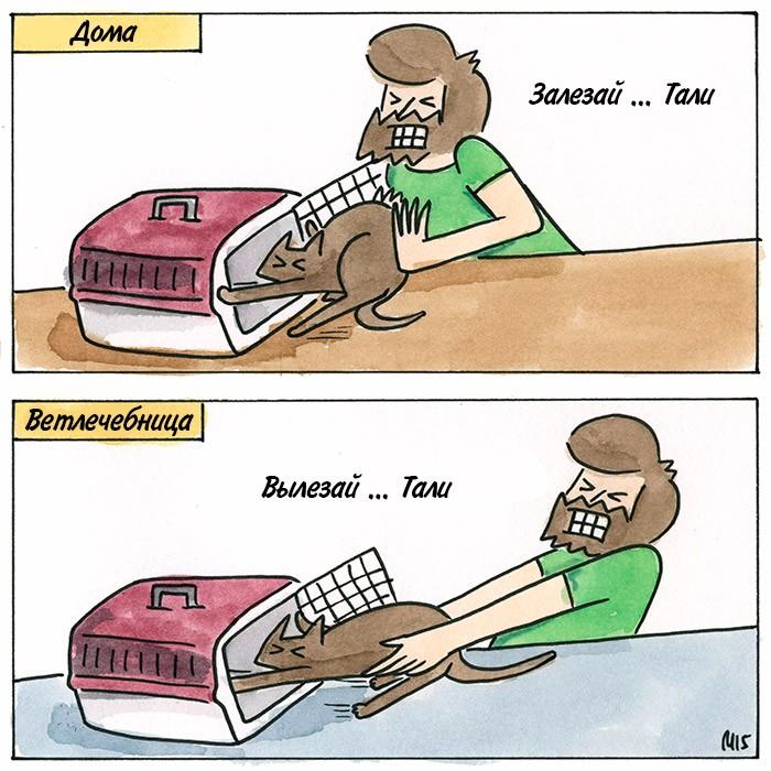 Коты и переноска