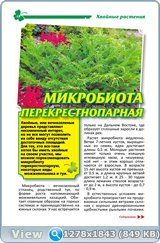 http://i6.imageban.ru/out/2017/12/03/5554ba57eff783ea4b1c44870cb97651.jpg