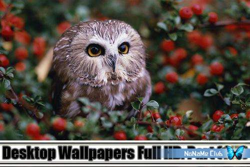 Обои - Desktop Wallpapers Full HD. Part (115) [JPG]