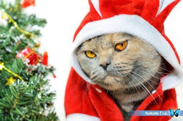 Растровый клипарт - Fotolia - Christmas Santa Claus Snow Maiden Suit Coat fur hat [JPG]