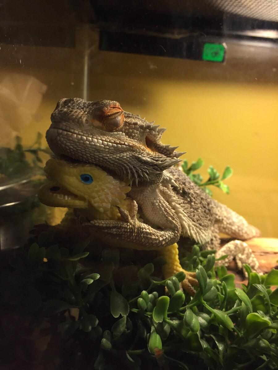 Две рептилии