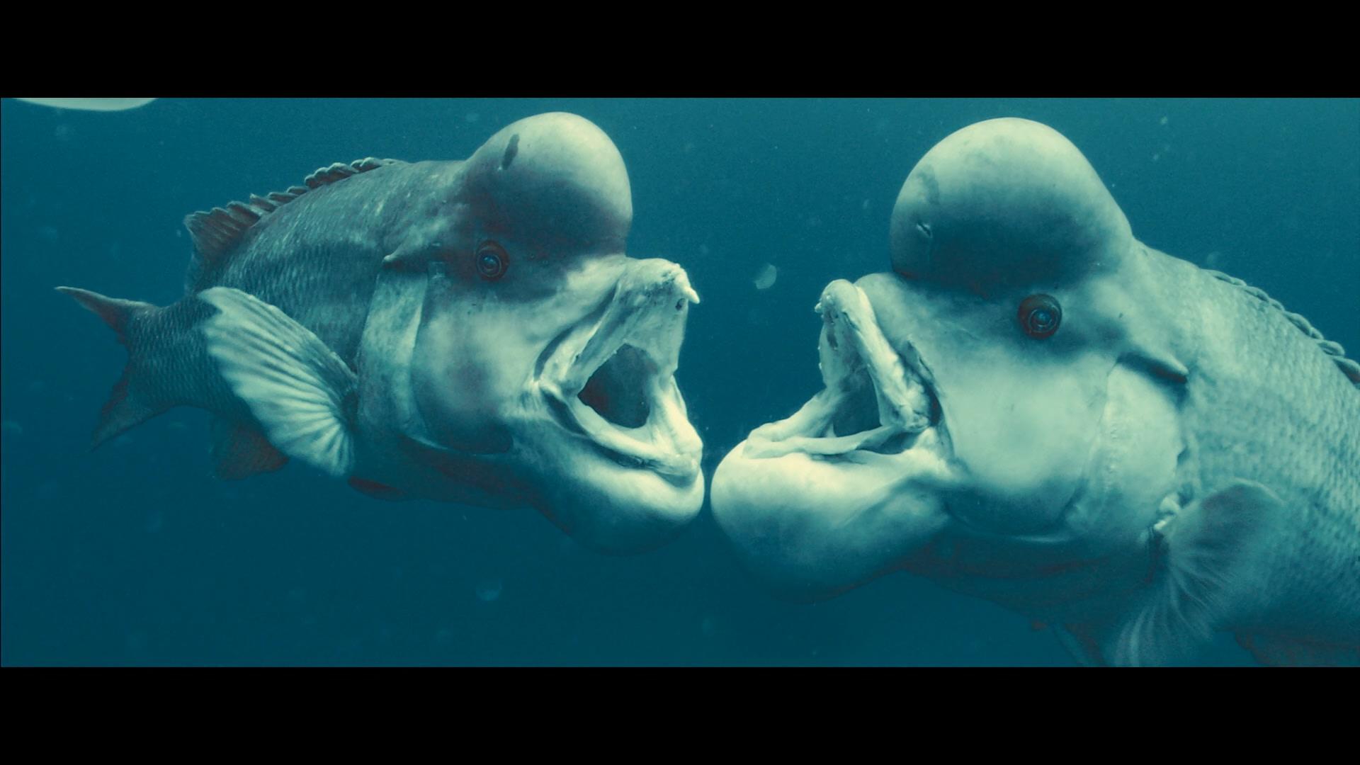 Океаны / Oceans (2009/BDRemux) 1080p, D