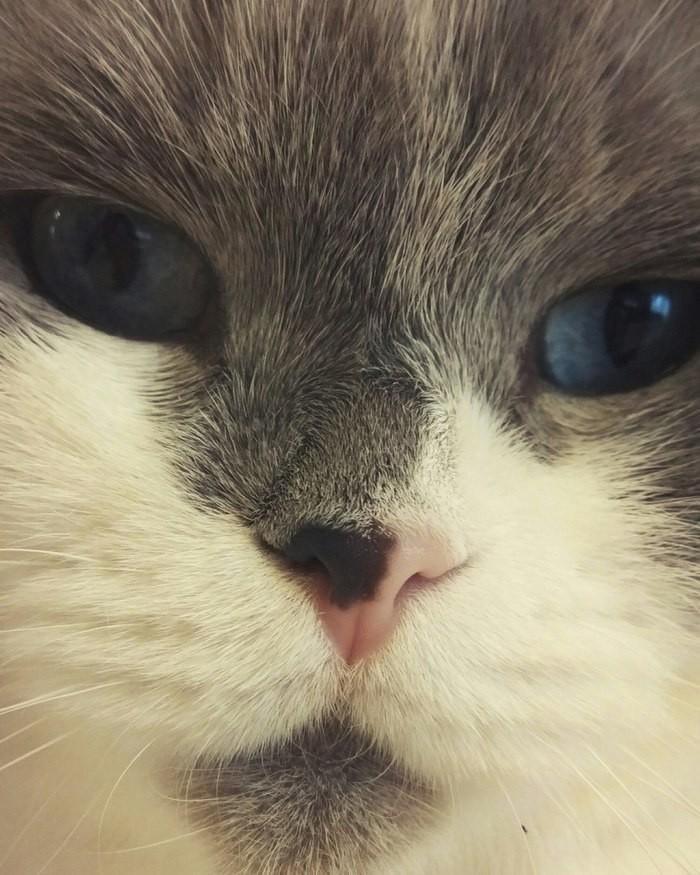 Синие глазки
