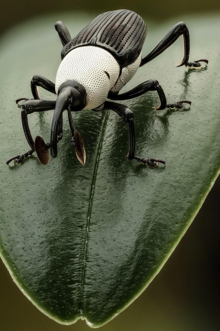Красивый жук