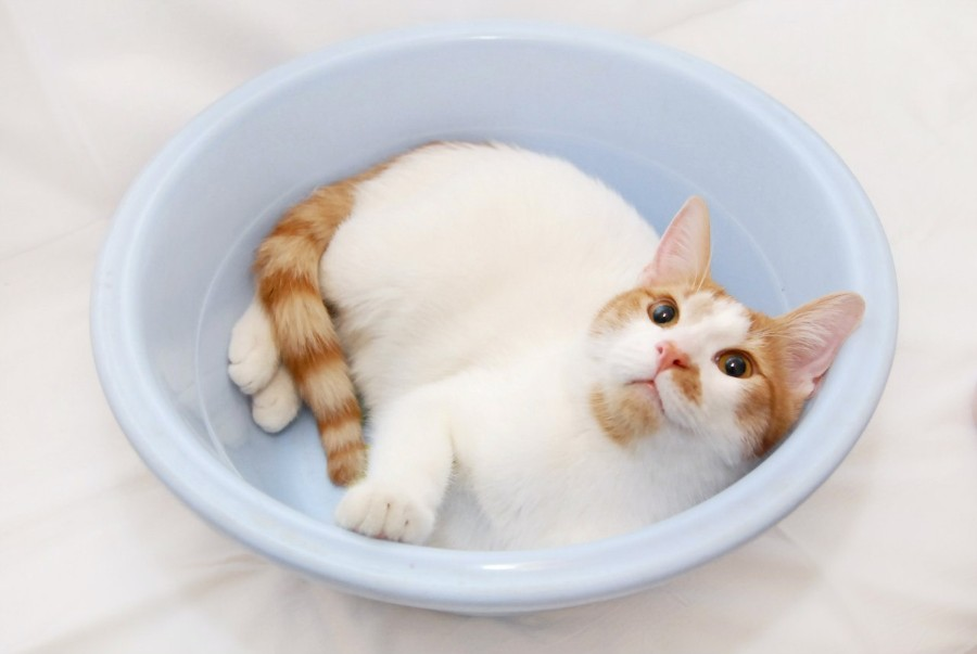 Котейка в тазике