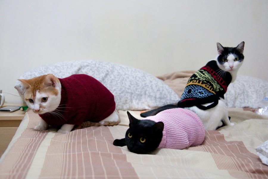 Котейки в свитерах