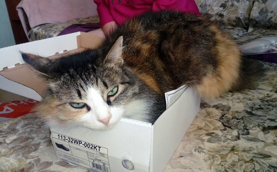 Котейка в коробке