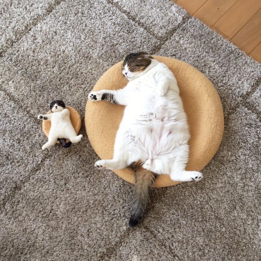 Кот и его копия