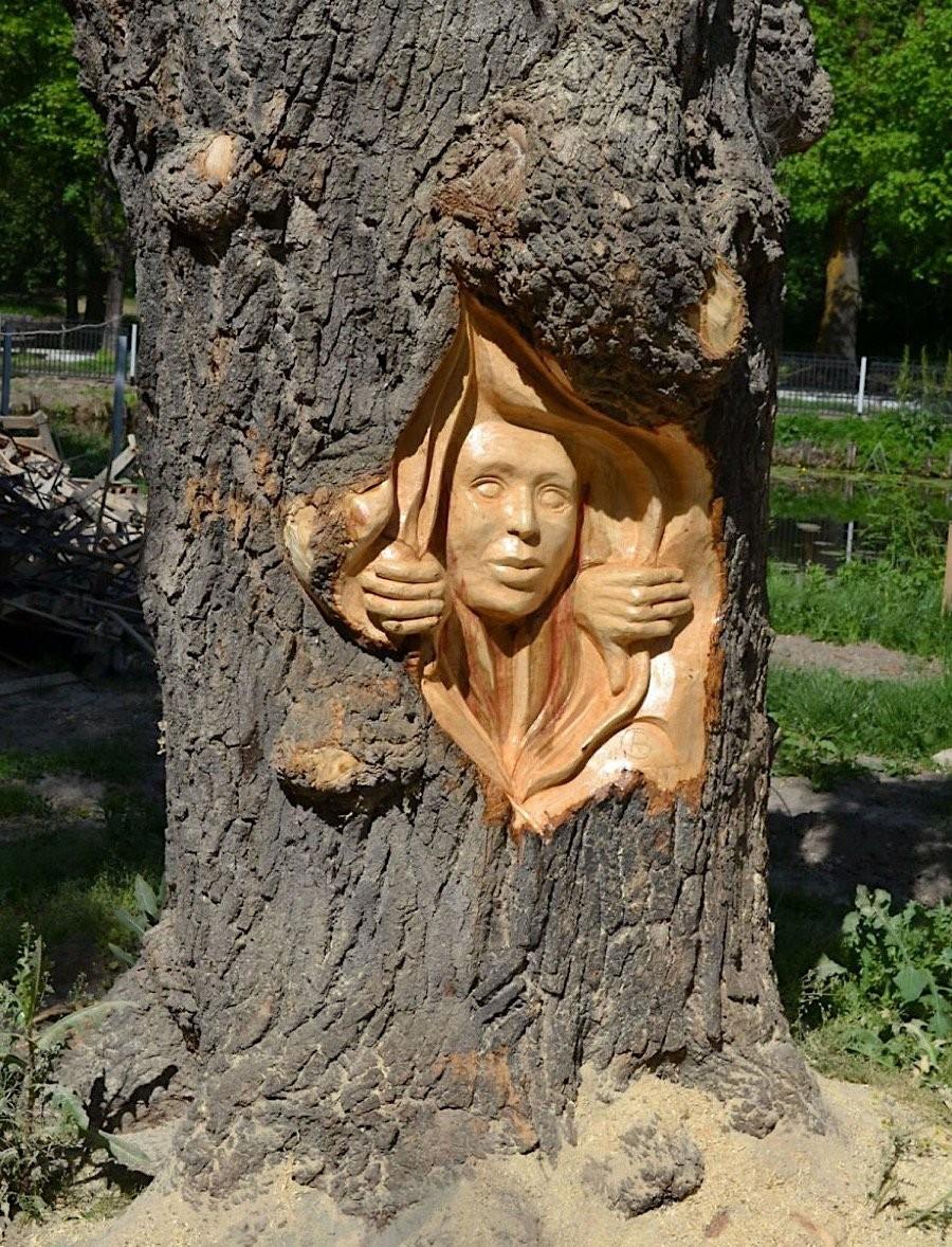 Лицо в дереве