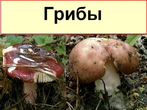 Скачать торрент энциклопедия грибов.