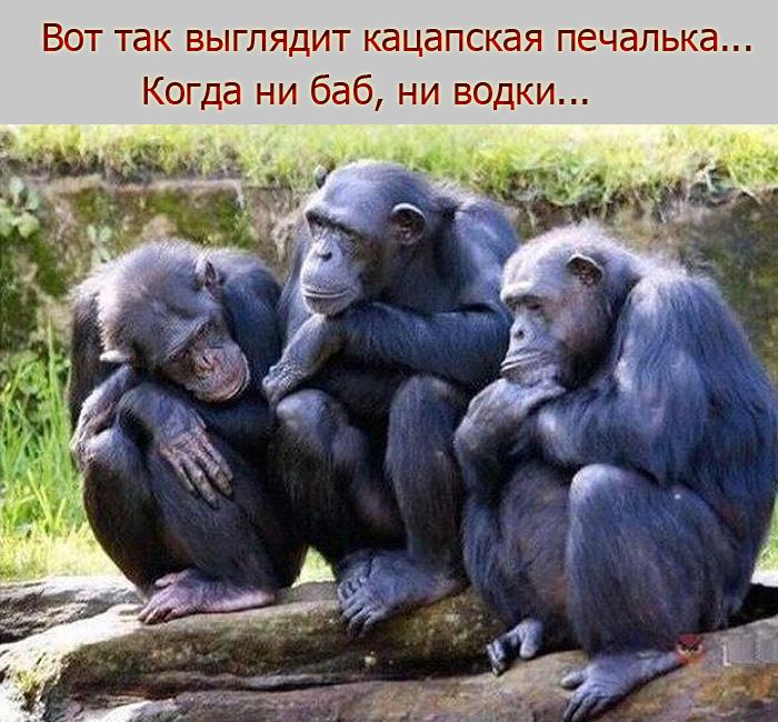 """Росія звинувачує Україну в катастрофі ракети """"Союз"""" із космонавтами на борту - Цензор.НЕТ 133"""