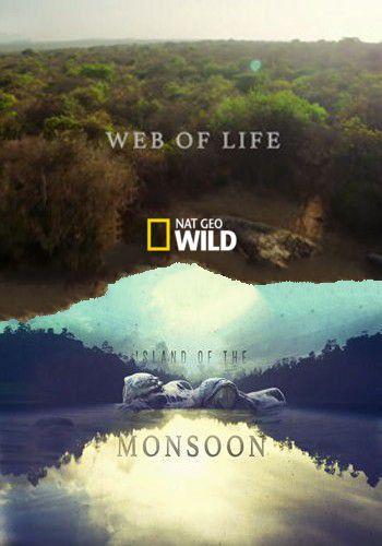 NGW: Остров муссонов. Паутина жизни / Island of the Monsoon. Web of life (2018) HDTV [H.264 / 1080i-LQ]
