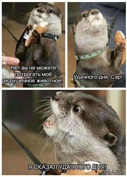 https://i6.imageban.ru/out/2019/03/04/ec062b83858a388a19cc95cc3a0721cc.jpg