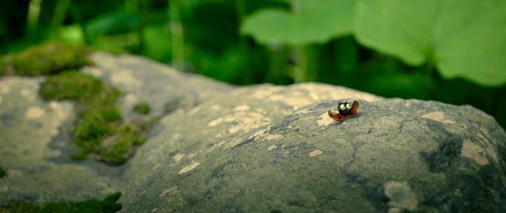 Minuscule.La.vallee.des.fourmis.perdues.2013.bdrip_[1.46]_[teko][(008391)19-12-05].PNG