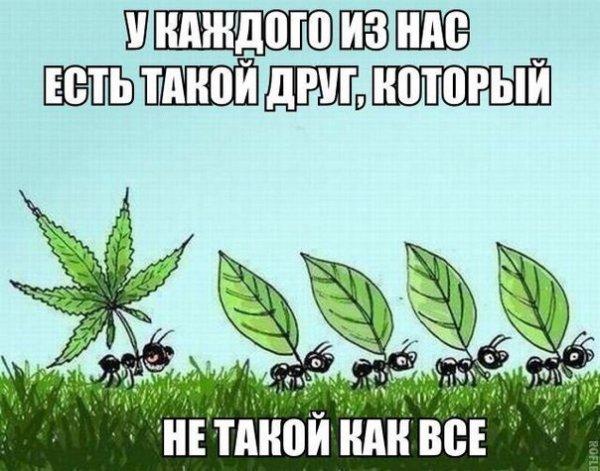 https://i6.imageban.ru/out/2020/09/01/af72dc75c8c1dc795947e878e88f1822.jpg