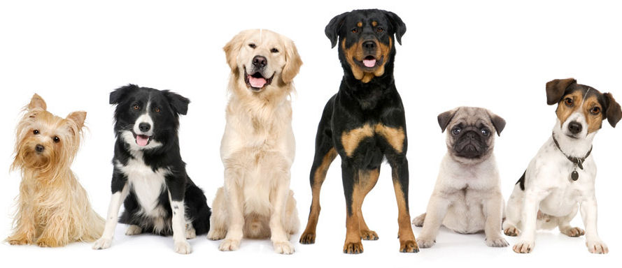 Где смотреть все породы собак с фото, названием и описанием