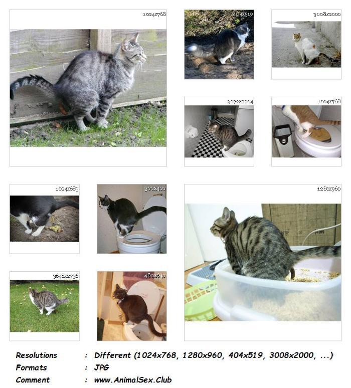 5f15f33da5d5743e0e6757ba38f6869e - Cat Pooping Animalsex - 40 Pics - Animal Sex Genitals Pictures