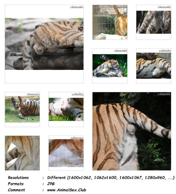 e6688f21df7ada6c3c0e6985054fe886 - My Tiger Pics - 51 Pics - Animal Sex Genitals Pictures