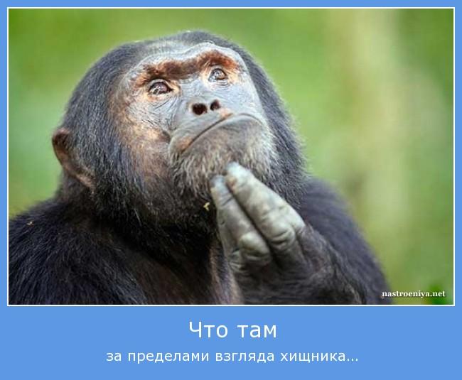 https://i6.imageban.ru/out/2021/07/17/2ac8ea9276da6bc3fdf29f57cc7cf2a0.jpg
