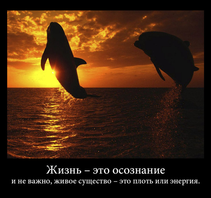 https://i6.imageban.ru/out/2021/07/17/4455e66a588ea8322a4e32b7f881ef29.jpg