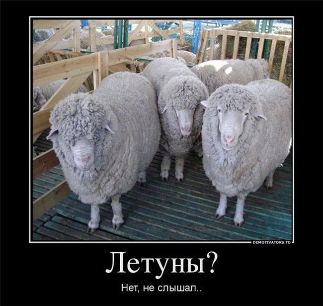 https://i6.imageban.ru/out/2021/07/17/453444f0509e6449714e5807372c77d1.jpg