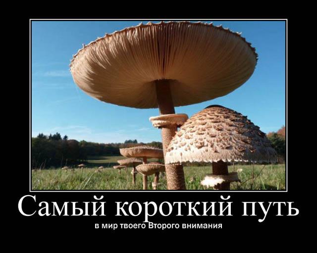 https://i6.imageban.ru/out/2021/07/17/989c0c3615922d762b2b4a372bf113a0.jpg