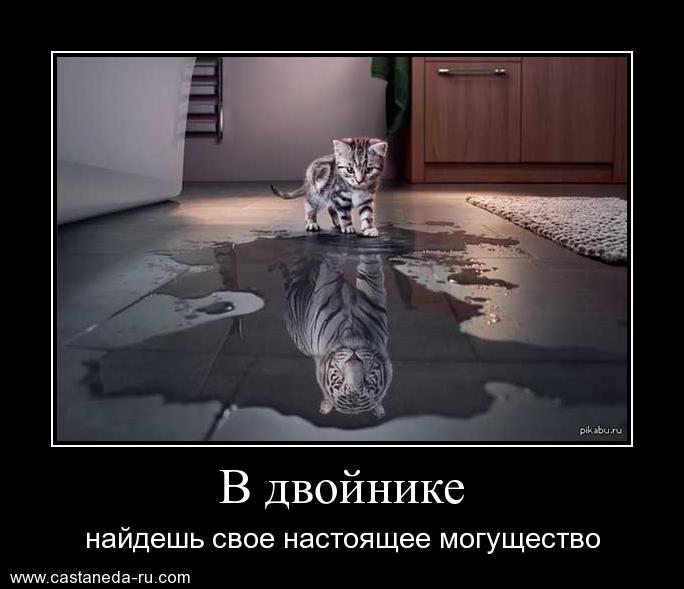 https://i6.imageban.ru/out/2021/07/17/9bddfcf42d124e3860276c1785815336.jpg