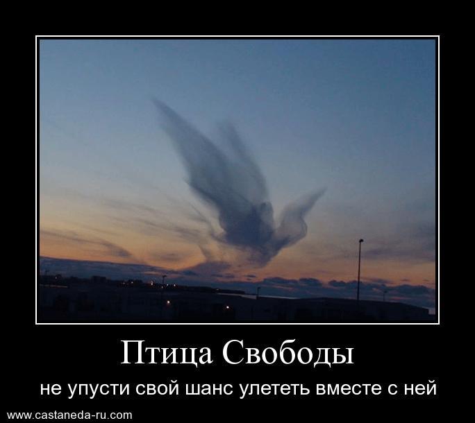 https://i6.imageban.ru/out/2021/07/17/9fe6756ce3662df27dd15f88ad76662a.jpg