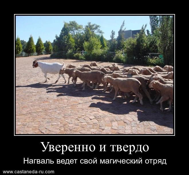 https://i6.imageban.ru/out/2021/07/17/ae92b520901245065bdb821895fb50c4.jpg