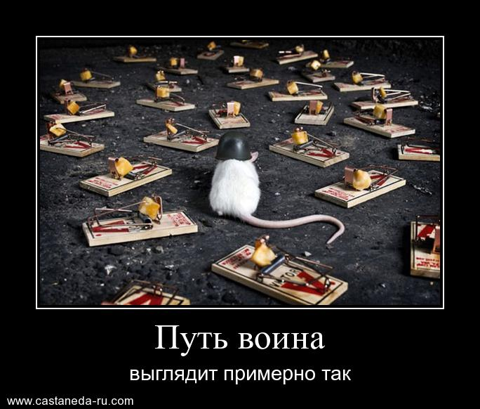 https://i6.imageban.ru/out/2021/07/17/c279729c26a6a38aa4343673d6a5085d.jpg