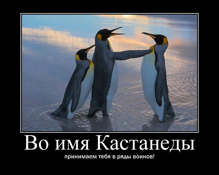 https://i6.imageban.ru/out/2021/07/17/c9a8a01b9e69b80d4f2caedd19757c1d.jpg