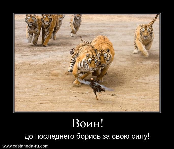 https://i6.imageban.ru/out/2021/07/17/dca13141e41c99cbda41ee8c0561014b.jpg