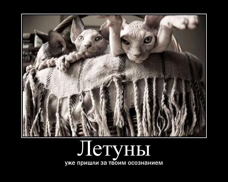 https://i6.imageban.ru/out/2021/07/17/e522d2420add262661bc98b135b73102.jpg