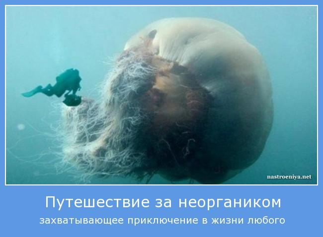 https://i6.imageban.ru/out/2021/07/17/f3046c355d7353d209d4d91437537787.jpg