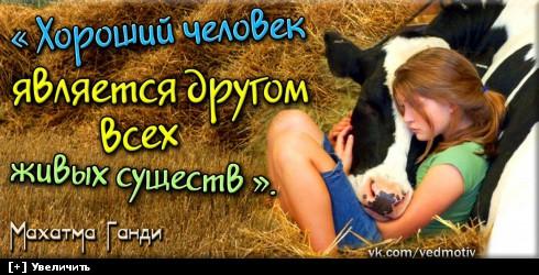http://i6.imageban.ru/thumbs/2013.10.23/4ad1e94d2faa08bf2fc6346529393469.jpg