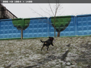 http://i6.imageban.ru/thumbs/2014.11.24/43482748a52851a79215535b719a541b.jpg