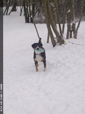http://i6.imageban.ru/thumbs/2014.12.28/30a69c477b35f4387b8c75b1bafad387.jpg