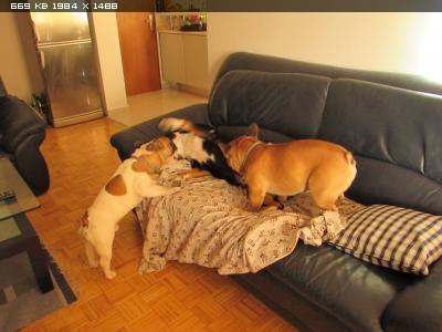 http://i6.imageban.ru/thumbs/2015.08.11/05f13a277c2fd44ee152cf70a4cc6741.jpg