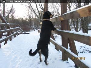 http://i6.imageban.ru/thumbs/2015.12.17/6263f616dd9a6d8e9e632730847f648c.jpg